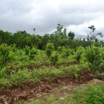 Land for sale in Ubud Bali - LUB159