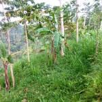 Land for sale in Ubud Bali - LUB161