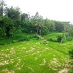 Land for sale in Ubud Bali - LUB162