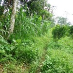 Land for sale in Ubud Bali - LUB164
