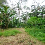 Land for sale in Ubud - LUB165
