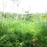 Land For sale in Ubud - LUB167