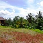Land in Ubud Bali - LUB168