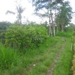 Land for sale in Ubud Bali - LUB140