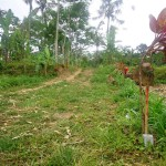 Land for sale in ubud bali - LUB011