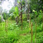 land for sale in ubud, bali LUB072