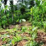 land for sale in ubud bali LUB074