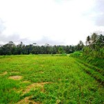 land for sale in ubud bali LUB084