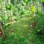 land for sale in ubud bali LUB091