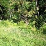land for sale in ubud bali LUB094