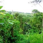 LUB098 land for sale in ubud bali