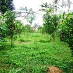 Land for sale in ubud bali - LUB099