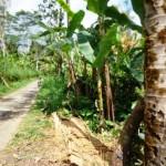 Land for sale in ubud bali - LUB100