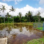 Land for sale in ubud bali - LUB101