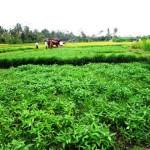 Land for sale in ubud bali - LUB103