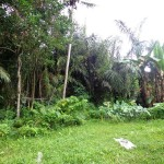 Land for sale in ubud bali - LUB105