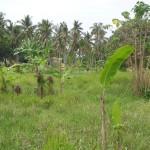 Land for sale in ubud bali - LUB106