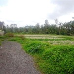 Land for sale in ubud - LUB107