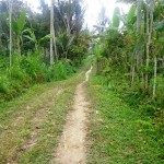 Land for sale in ubud bali - LUB112