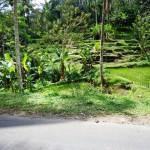 Land for sale in Ubud Bali - LUB115