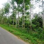 Land for sale in Ubud Bali - LUB117
