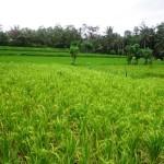 Land for sale in Ubud bali - LUB120