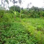 Land for sale in Ubud Bali - LUB122