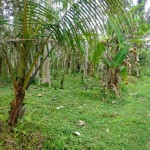 Land for sale in Ubud Bali LUB125