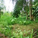 Land for sale in Ubud Bali - LUB126