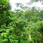 Land for sale in Ubud Bali - LUB127
