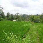 Land for sale in Ubud Bali - LUB129
