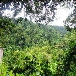Land for sale in Ubud Bali - LUB130