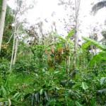 Land in Ubud Tegalalang - LUB134