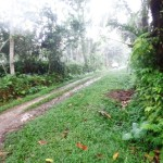 Land for sale in Ubud Bali - LUB136