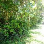 Land for sale in Ubud Bali - LUB137