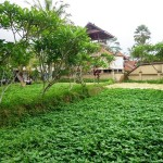 Land for sale in Ubud Bali - LUB142