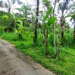 Land for sale in Ubud Tegalalang - LUB145