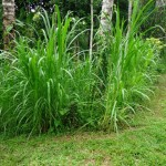 Land for sale in Ubud Tegalalang - LUB146