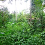 Land for sale in Ubud - LUB147