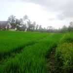 Land for sale in Ubud Tegalalang - LUB148
