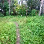 Land for sale in Ubud Tegalalang - LUB149