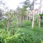 Land for sale in Ubud - LUB151