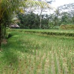 Land for sale in Ubud Bali - LUB141