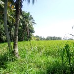 Land for sale in Ubud - LUB139
