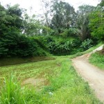 Land for sale in Ubud Bali - LUB189