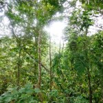 Land for sale in Ubud