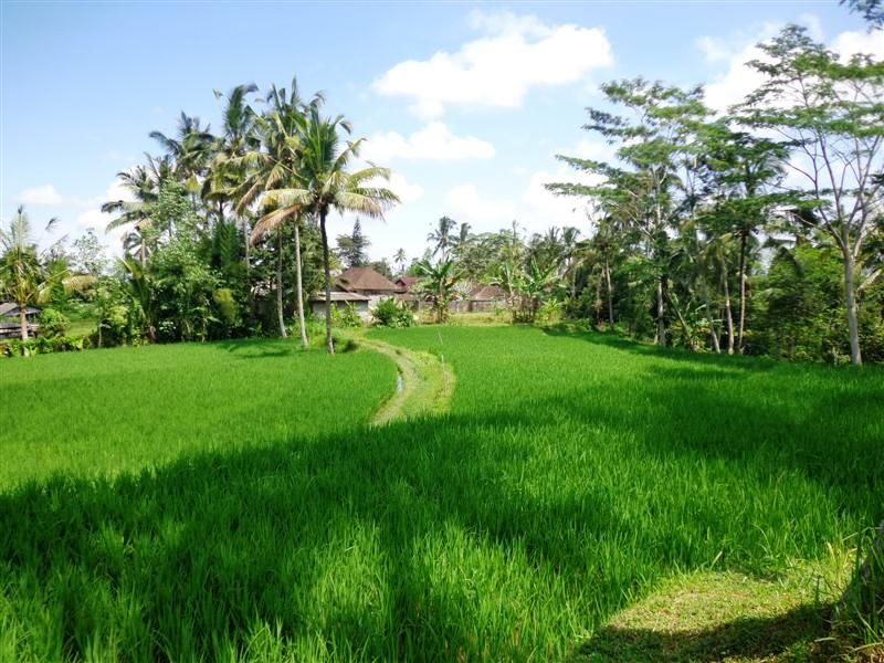 1. Land for sale in Ubud