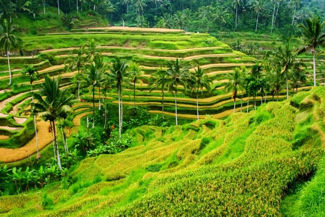 Ubud Nature Beauty