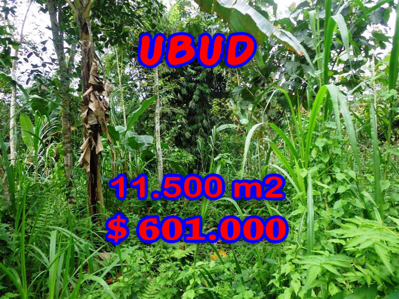 Land-for-sale-in-Bali