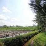 Ubud Land for sale in Ubud Bali